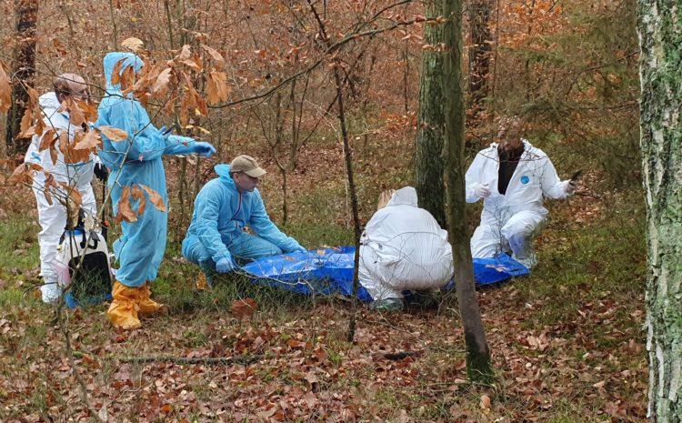 Pierwszy przypadek ASF w województwie lubuskim